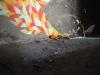 05_forty_bema_galeria_urban_artu